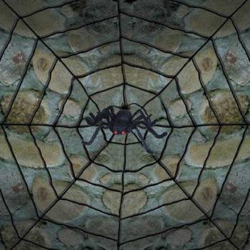 Riesen Spinnennetz mit ekliger Spinne