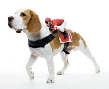 Jockey Reiter Hundekostüm