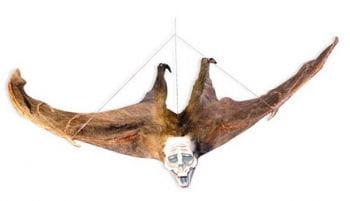Haarige Fledermaus mit Geister Fratze