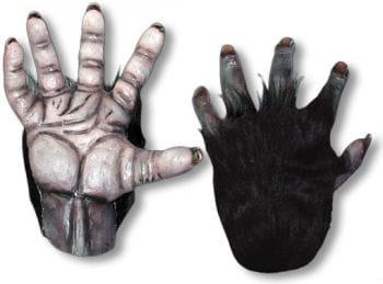 Chimpanzee hands black