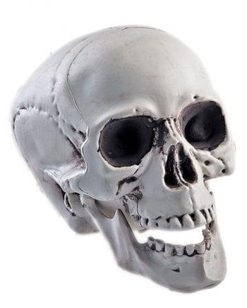 Totenschädel mit beweglichem Kiefer