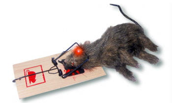 Rat in a trap Animatronic