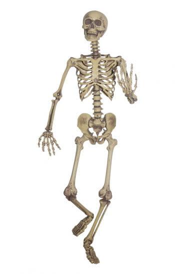 Realistic Skeleton Hanging Prop