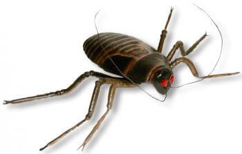 Riesen Kakerlake