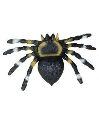 squeeze tarantula