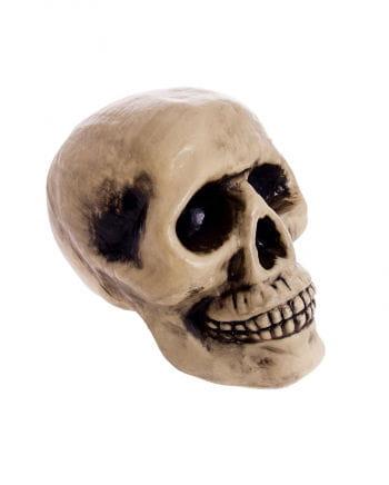 Skull Beige