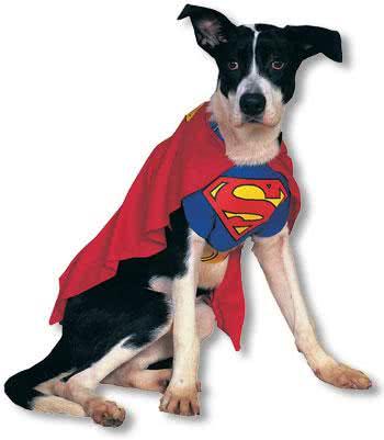 superman hunde kost m s f r fasching horror. Black Bedroom Furniture Sets. Home Design Ideas