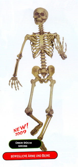 Realistic Skeleton, moveable Arms / Legs