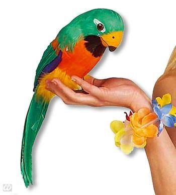 Gefiederter Papagei grün und orange