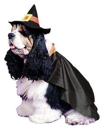 Witch Dog Costume