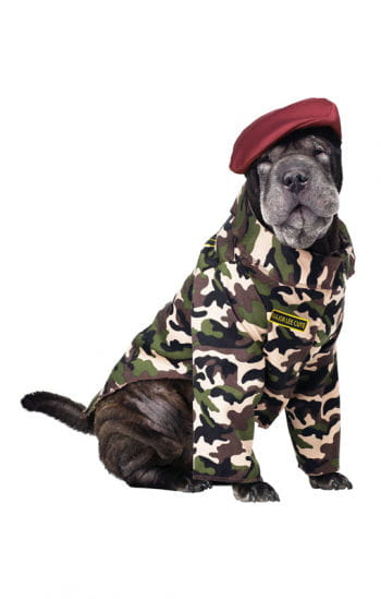 Soldier costume for dogs
