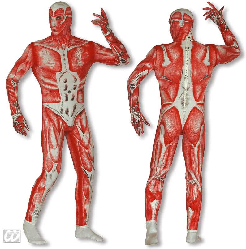 Großzügig Top Anatomie Anwendungen Galerie - Anatomie Ideen ...