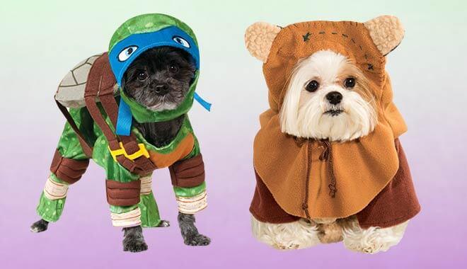 Dog's Halloween Costumes
