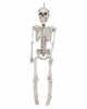 Klappriges Skelett Hängefigur 30 cm