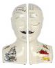 Phrenology Head Bookends