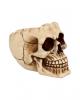 Realistische Totenschädel Schale mit offener Schädeldecke
