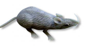 Gray latex mouse