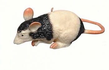Rat Black and White Squeezy 6cm