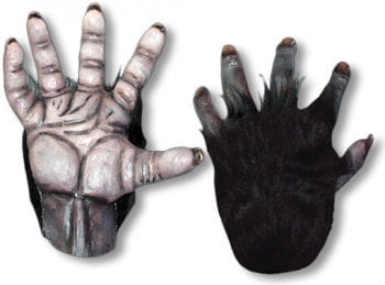 Chimpanzee hands black