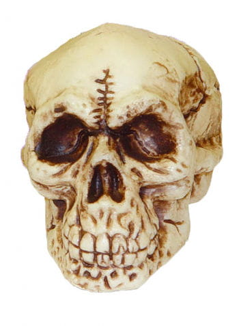 Verrottender  Totenschädel 10 cm