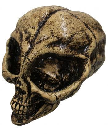 Totenschädel Alien