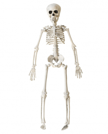 Halloween Knochenskelett 40 cm