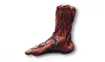 skinned right foot