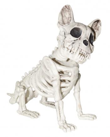 Dog Skeleton Sitting Great Dane
