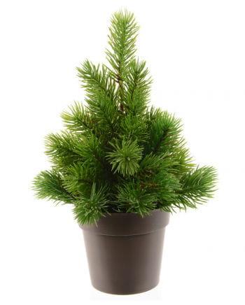 Tannenbaum mit Topf 25 cm