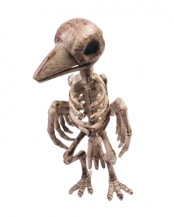 Realistic Raven Skeleton Halloween Deco