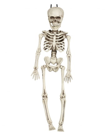 Mini Skeleton Torso Hanging Figure 40cm