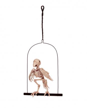 Papagei Skelett auf Schaukel 32 cm