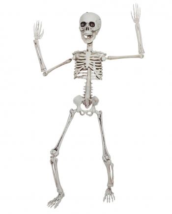 Positionierbares Knochengerippe 50cm