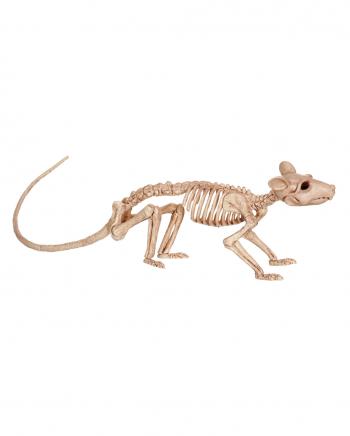 Ratten Tierskelett