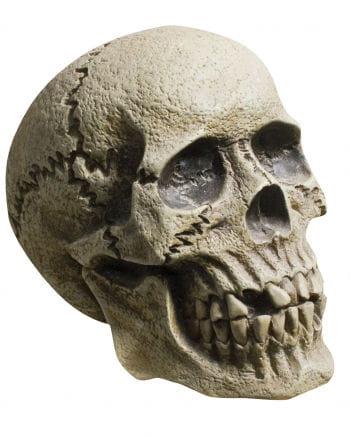 Verwitterter Skull Totenkopf
