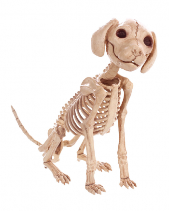 Sitting Dog Skeleton 30 Cm