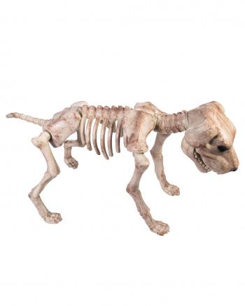 Skelett Hund Halloween Deko