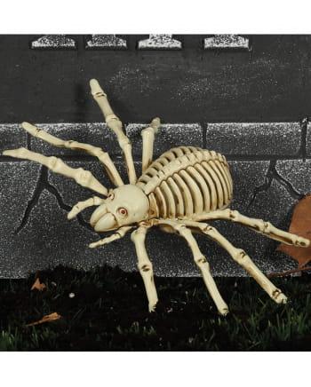 Spinnen Skelett 24cm