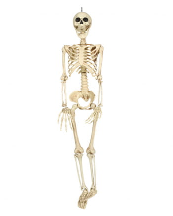Skeleton Torso Hanging Figure 90cm