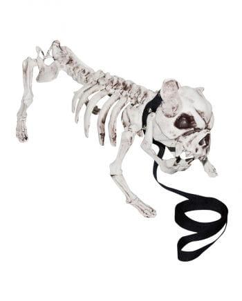 Skelettierter Hund