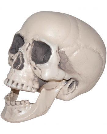 Totenschädel mit beweglichem Unterkiefer