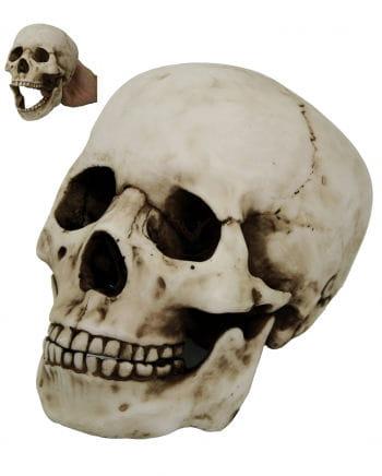 Totenkopf mit beweglichem Kiefer