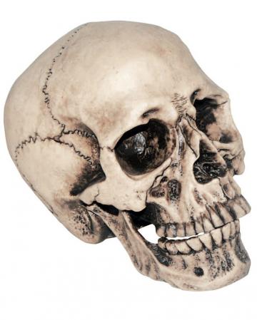 Anthropo Skull