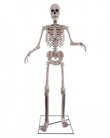 Riesiges Skelett Halloween Animatronic