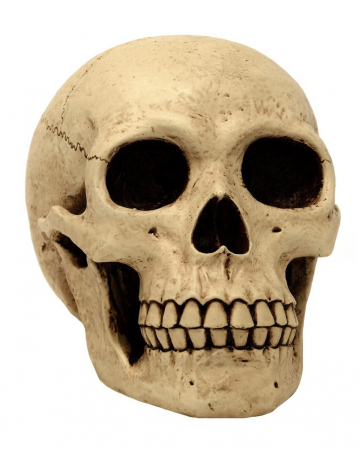 Large Skull Money Box 21 Cm