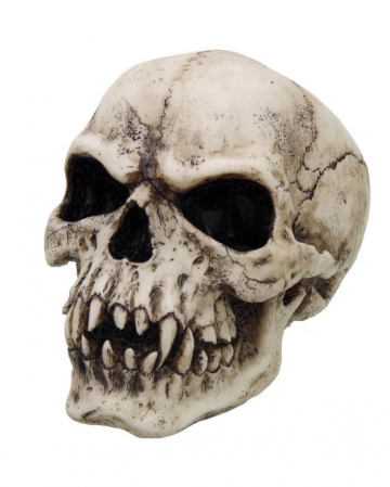 Vampir Totenkopf 17 cm