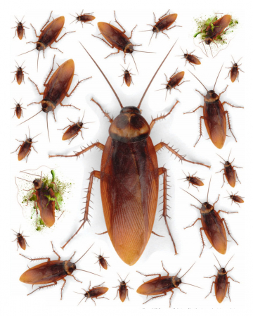 Cockroach Wall Sticker 29 Pieces