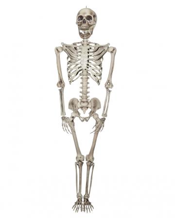 Lebensgroßes Skelett 200 cm