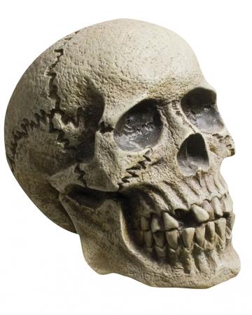 Rotting Skull Totenschädel
