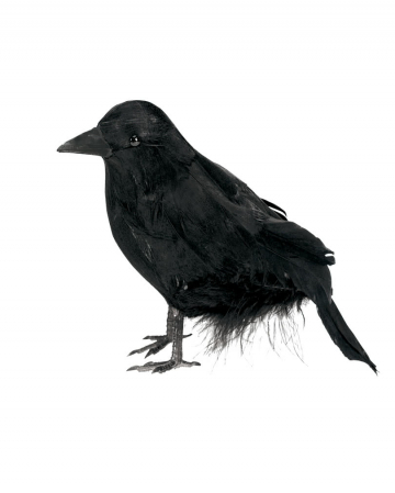 Schwarzer Rabe 15 cm